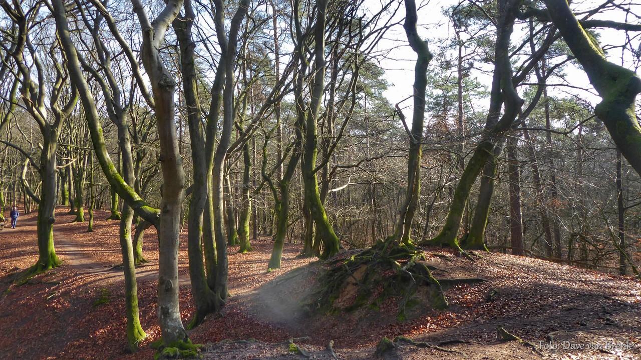 Garderen,  Dansende Bomen in het Speulderbos